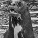 Otter. by gamelee