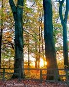 27th Oct 2017 - Woodland sunset