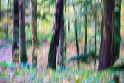 25th Oct 2017 - 50 shades of autumn