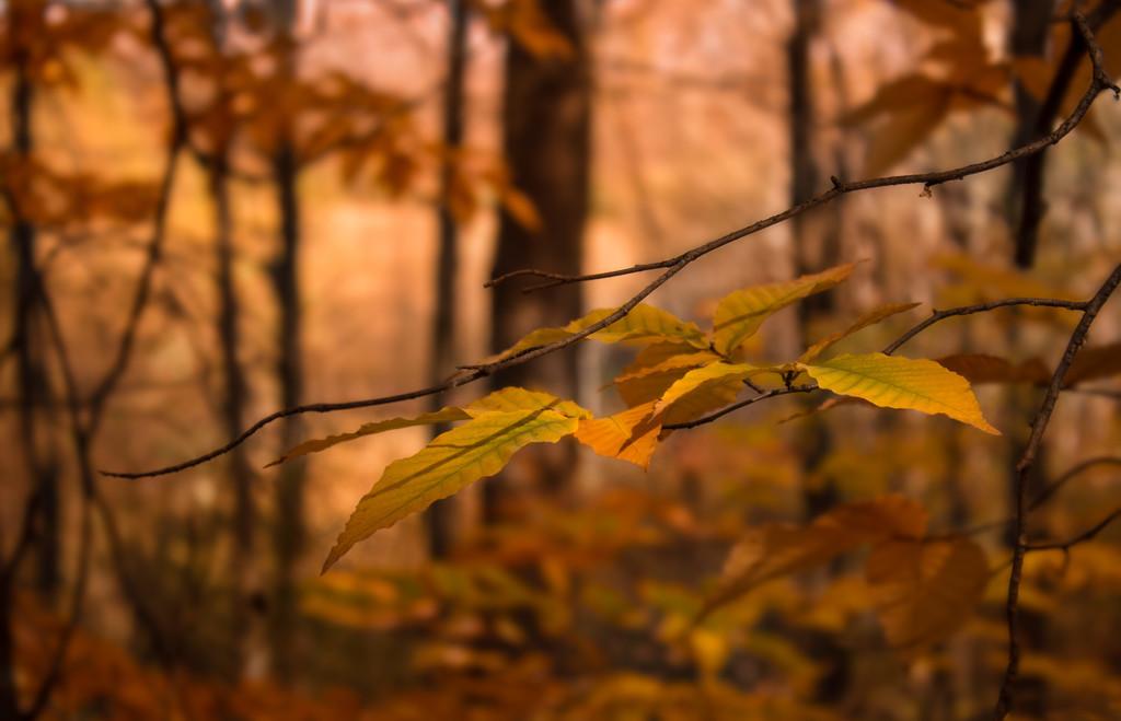 warm forest by adi314