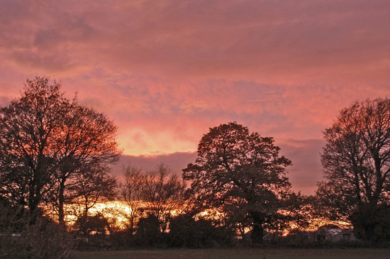 Rosy Skies by fbailey