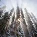 Magical Fog by exposure4u