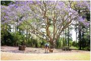 30th Oct 2017 - Roger park Yarraman, Queensland
