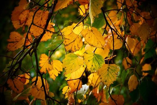 Autumn Leafy Lane by carole_sandford