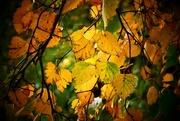 30th Oct 2017 - Autumn Leafy Lane