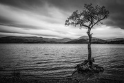 30th Oct 2017 - Lone tree