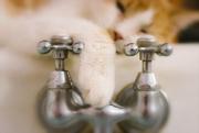 29th Oct 2017 - bath cat
