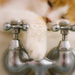 bath cat by aecasey