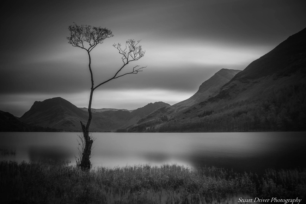 The Lone Tree by pasttheirprime