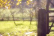 30th Oct 2017 - Velvet orchard