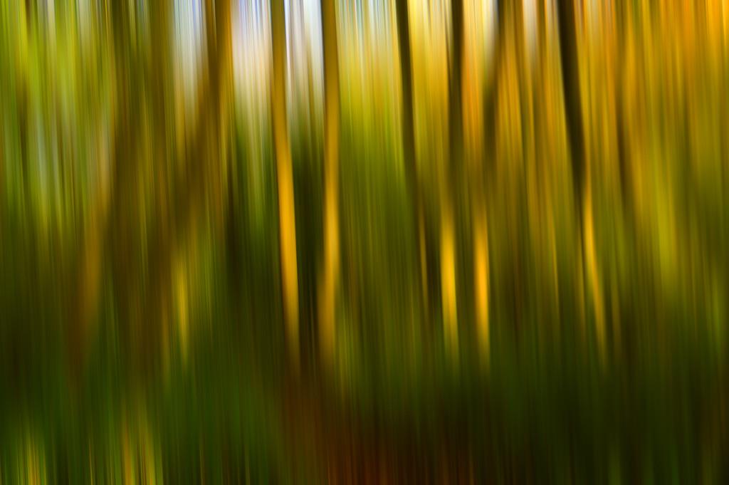 Autumn blur by fbailey