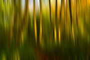 30th Oct 2017 - Autumn blur