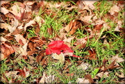 29th Oct 2017 - Autumn yard