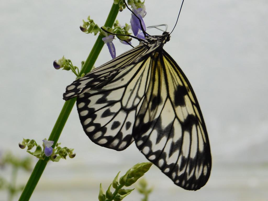 Butterfly Farm by 365anne