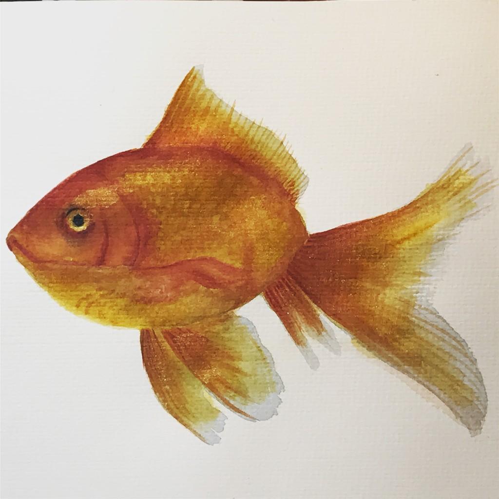 goldfish by pesus