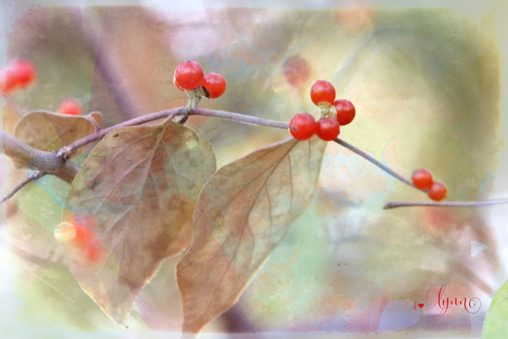 Autumn Berries by lynnz