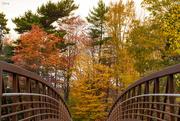 25th Oct 2017 - Over the bridge