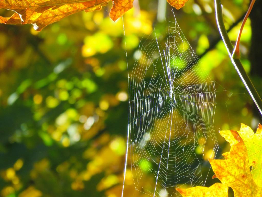 Elevated Web by seattlite