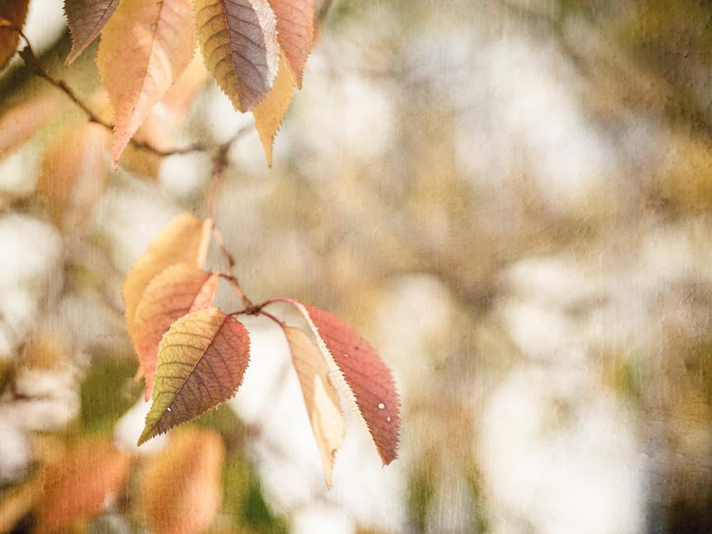 leafy goodness by pistache