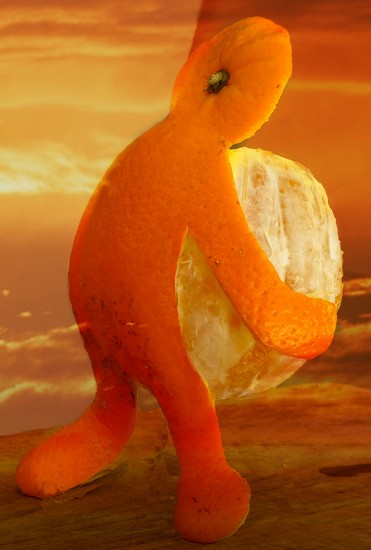 Still carrying this darn orange around! by ludwigsdiana