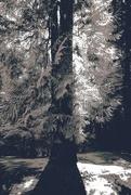 2nd Nov 2017 - tree