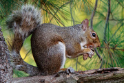 2nd Nov 2017 - The Squirrels Are Busy Today