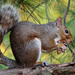 The Squirrels Are Busy Today by batfish