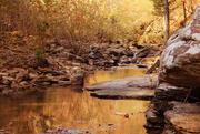 2nd Nov 2017 - The Golden Creek