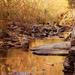 The Golden Creek by milaniet