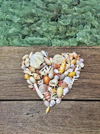 Heart of shells. by cocobella