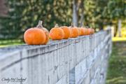 3rd Nov 2017 - Pumpkins in a row