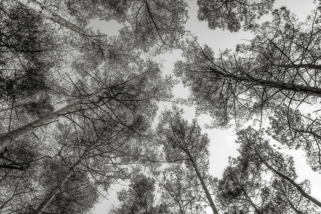Treetops... by vignouse