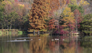 3rd Nov 2017 - On Goddard Pond