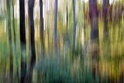 2nd Nov 2017 - Autumn blur