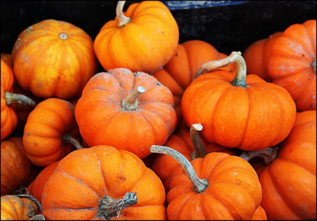 Mini-pumpkins at the Farmer's Market by olivetreeann