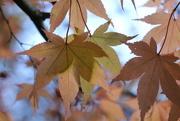 3rd Nov 2017 - Autumn Colours