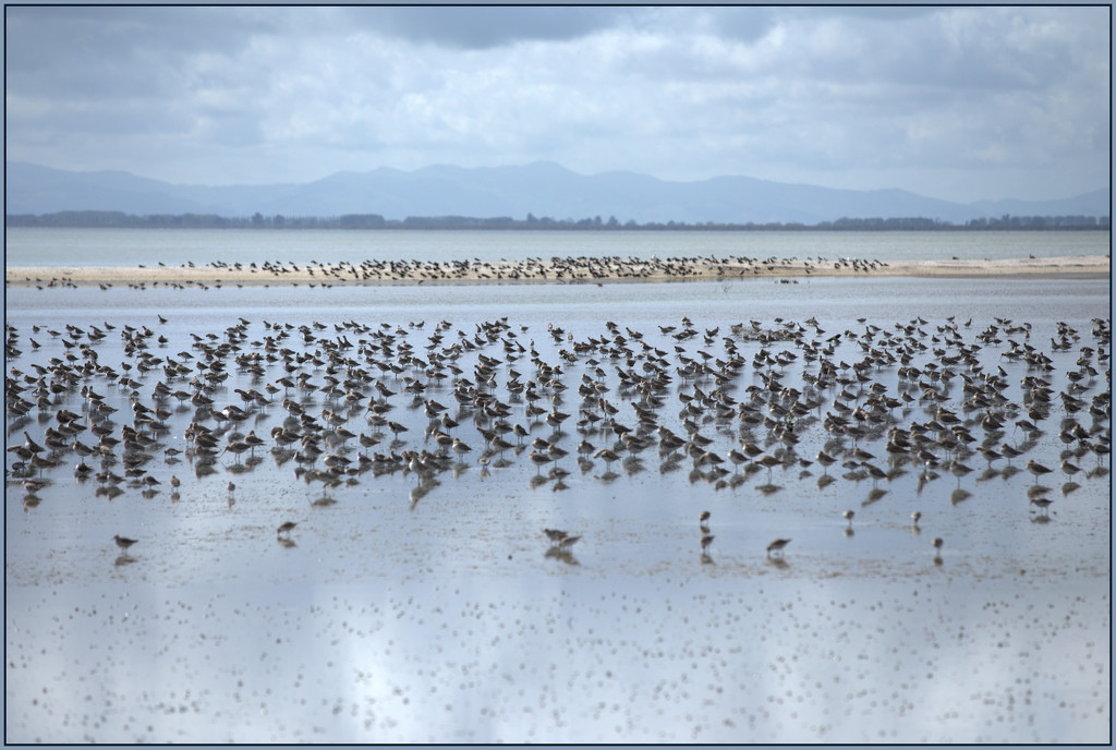 Birds by the mile by dide