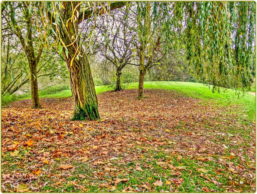 Autumn Carpet by carolmw