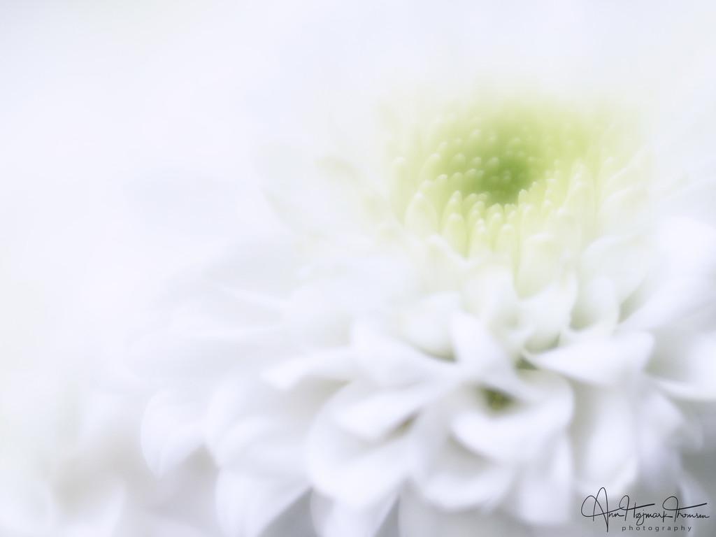 High key softness by atchoo