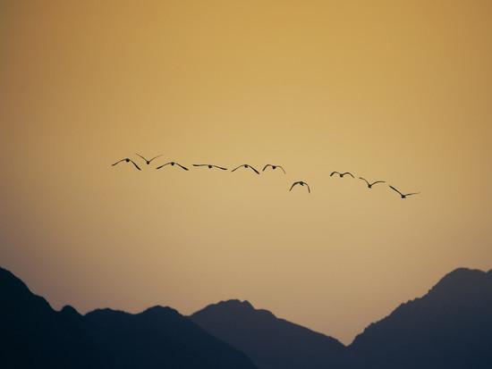 In Flight by salza