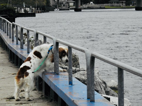 Looking for ducks by amyk