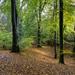 Thorncombe Woods