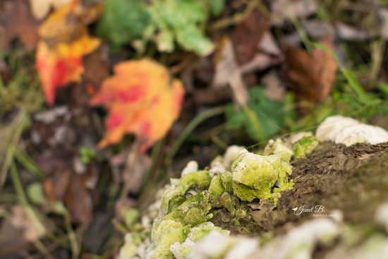 Mossy Fungus In The Fall Forest by janetb