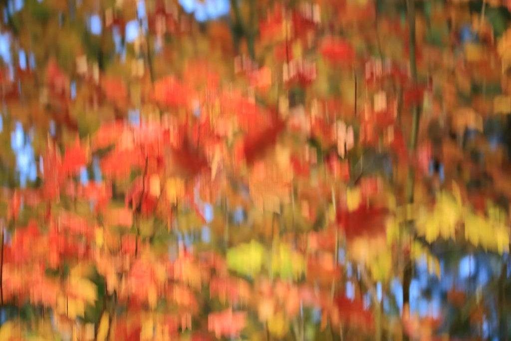 fall colors by blueberry1222