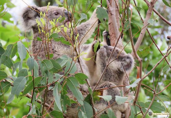 am I doing it right mamma? by koalagardens