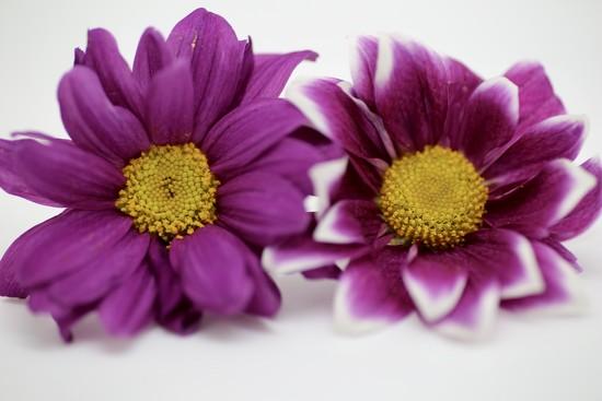 Macro Purple by phil_sandford