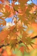8th Nov 2017 - a warm fall