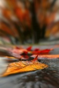 7th Nov 2017 - 2017-11-07 autumn leaves in puddle