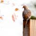 Sitting on a post! by fayefaye