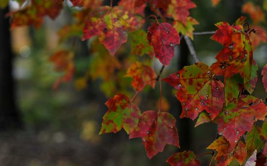 Colors of Pennsylvania 7 by loweygrace